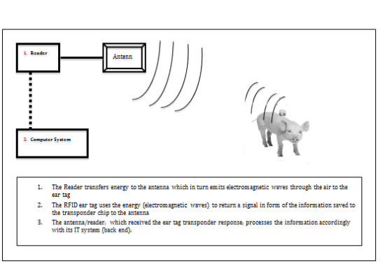 RFID Animal Tracking(image 1)